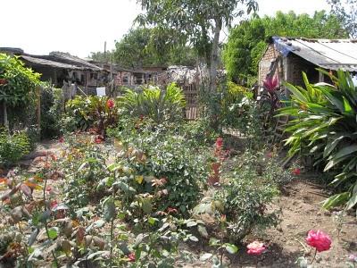 Barron Garden