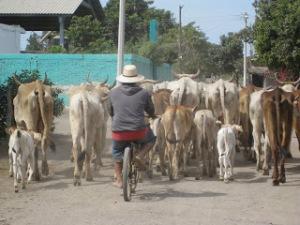 Vaca Bike